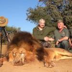 Lion-BigMale-$38000