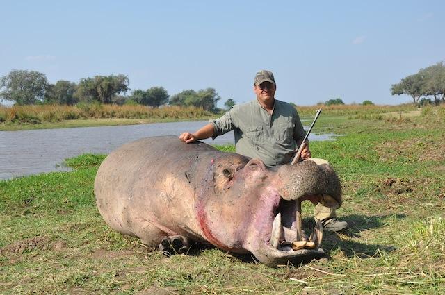 Hippo-Brett-Hinton