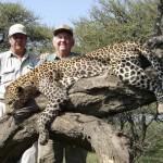 Leopard-Ray