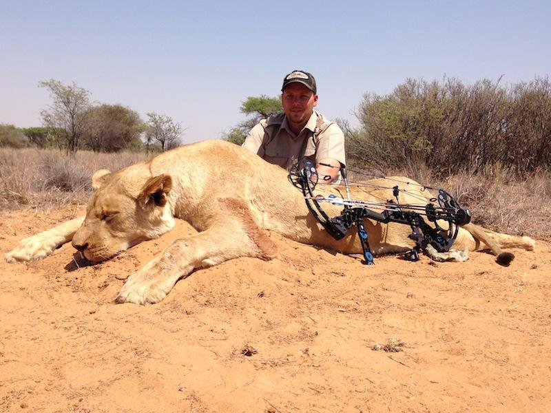 Lionness-Steve-bow-$8500